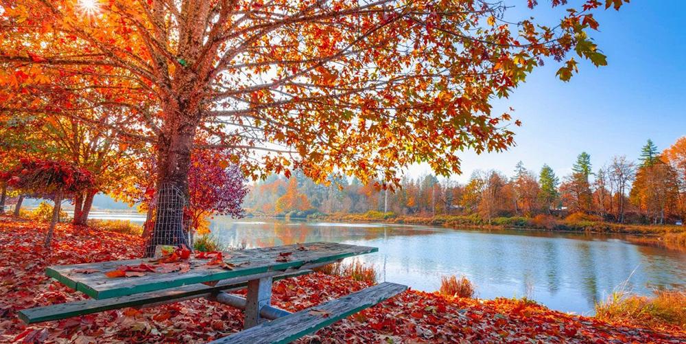 Il Canto d'autunno, in formato PDF